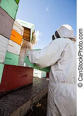 Beekeepers Unloading Honeycomb Crates