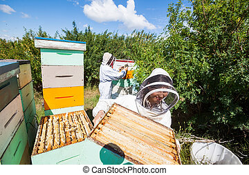 Beekeepers Working In Apiary