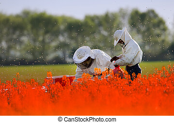 Beekeepers working in the field