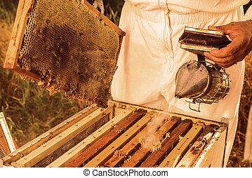 beekeeping, 工具