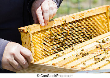 Beekeeping - A beekeeper checking her hive.