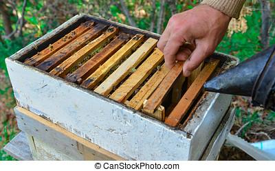 beekeeping, beroep