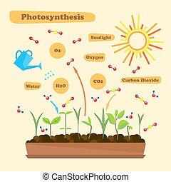 beeld, photosynthesis