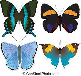 beelden, van, mooi, vlinder