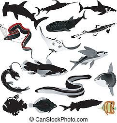 beelden, vissen, vector