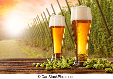 Beer glasses with hop-field on background