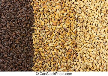 Beer Ingredients - Pale malt, crystal malt, chocolate malt