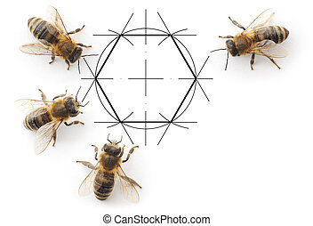 bees and drawing honeycombs - Four bees which consider the...