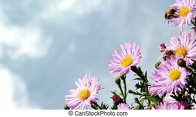bees, flowers and sky