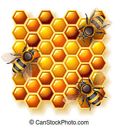 bees and honey - Vector illustration - bees on honeycomb, ...