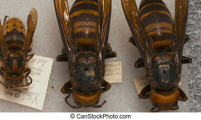 Bees and Wasps, Smallest to Largest - Handheld, panning,...
