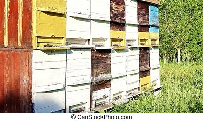 Bees are flying into the beehive. - Vintage on colorful...