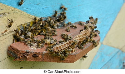 Bees at the beehive. - Bees at the entrance to the hive.