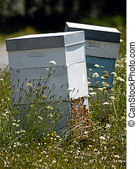 Bees Beehive - Beehives in a field of flowers