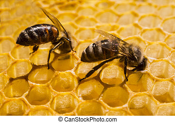 Bees build a honeycomb.