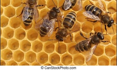 Bees build honeycombs - Cell measurements corresponds to...