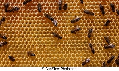 Bees build honeycombs.