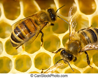 Bees build honeycombs