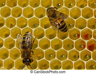 Bees complete work on creating honeycombs.