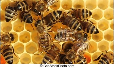 Bees convert nectar into honey and cover it in honeycombs