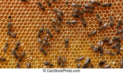 Bees convert nectar into honey, and cover it in the comb.