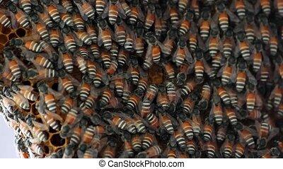 Bees convert nectar into honey