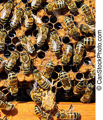 Bees destroy the hostess of family cocoon. They destroyed an...