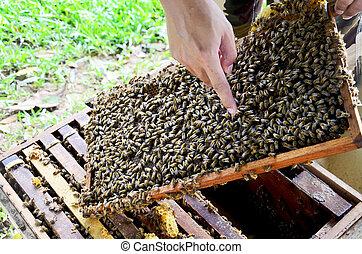 Bees farm at Phrae, Thailand