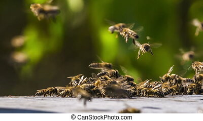 Bees Fighting With Aliens - Shot of swarm of bees fighting...