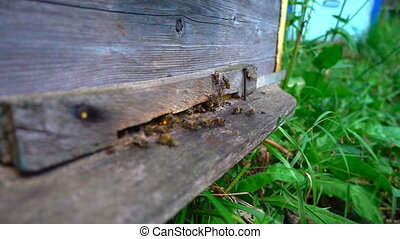 Bees fly from beehive, slow motion - Bees fly from beehive...