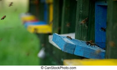 Bees fly into beehive - Bees are flying home to beehive