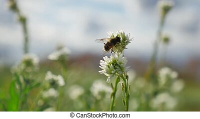 Bees fly to green plants bee nature grass - Bees fly to...