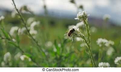 Bees fly to green plants bee nature