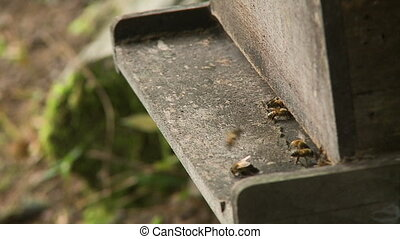 A still high angle shot of some bees in focus flying around and settling on a wooden plank as the sun shines on a warm and lush day
