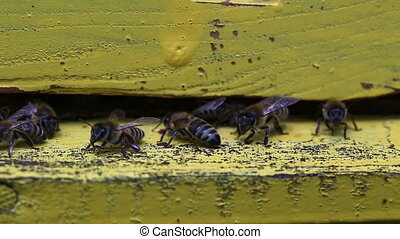 bees flying in and out beehive close up view