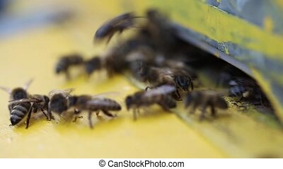 Bees flying into a hive - Bees flying with bee pollen into a...