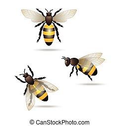 Realistic flying honey bees set isolated on white background vector illustration