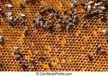 Bees in a beehive working on honeycombs