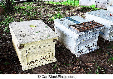 Bees in bees farm at Phrae, Thailand