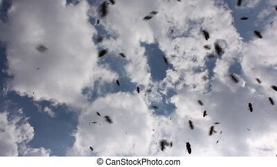 Bees in fligh - Swarming bees. Formation of a new colony...