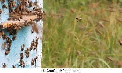 Bees in flight - Bees that can fly at some point fly out of...