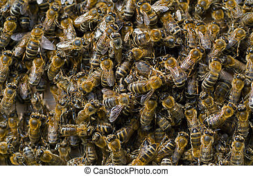 Bees in hive 2