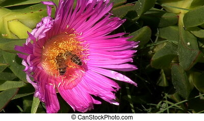 bees in the flower