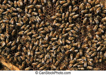 bees in the hive  - bees in the hive, Very many bees