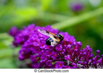bees nectar flower