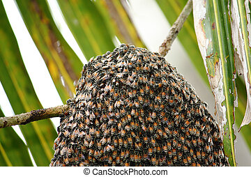 bees on honeycomb in nature