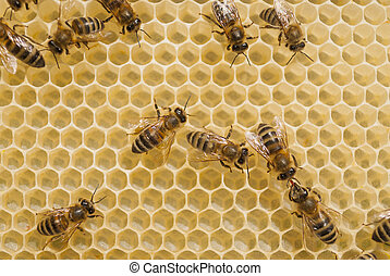 Bees on honeycomb with honey.