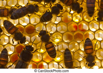 Bees on honeycombs.
