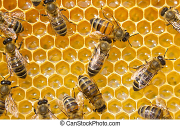 Bees on honeycombs. Bees work in a team.