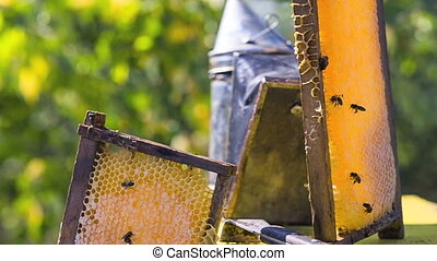 Bees on honeycombs filled with honey - Bees on the framework...